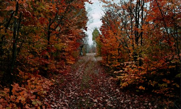 FALL 6 - A very inviting fall path to walk down in hues of burnt orange and soft browns